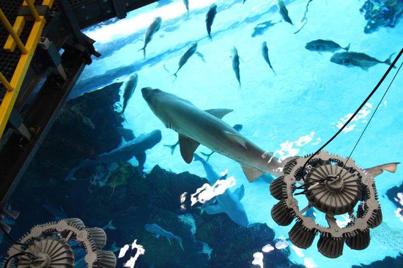 Quảng cáo, giới thiệu dịch vụ: Vui chơi miễn phí tại các điểm đến nổi tiếng ở Las Vegas Mỹ Shark_tank_tour556ue